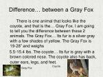 difference between a gray fox