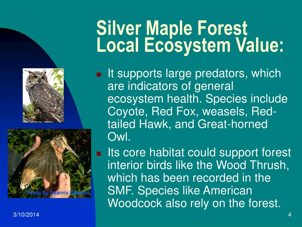Silver Maple Forest Local Ecosystem Value: