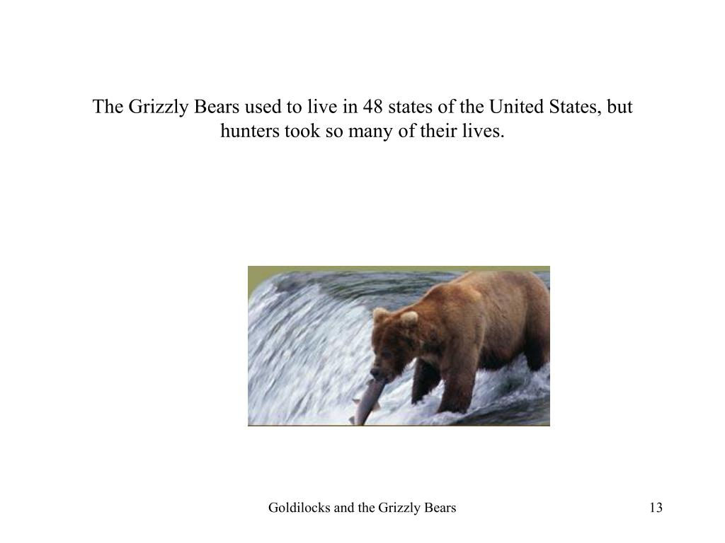 The Grizzly Bears used to live in 48 states of the United States, but hunters took so many of their lives.