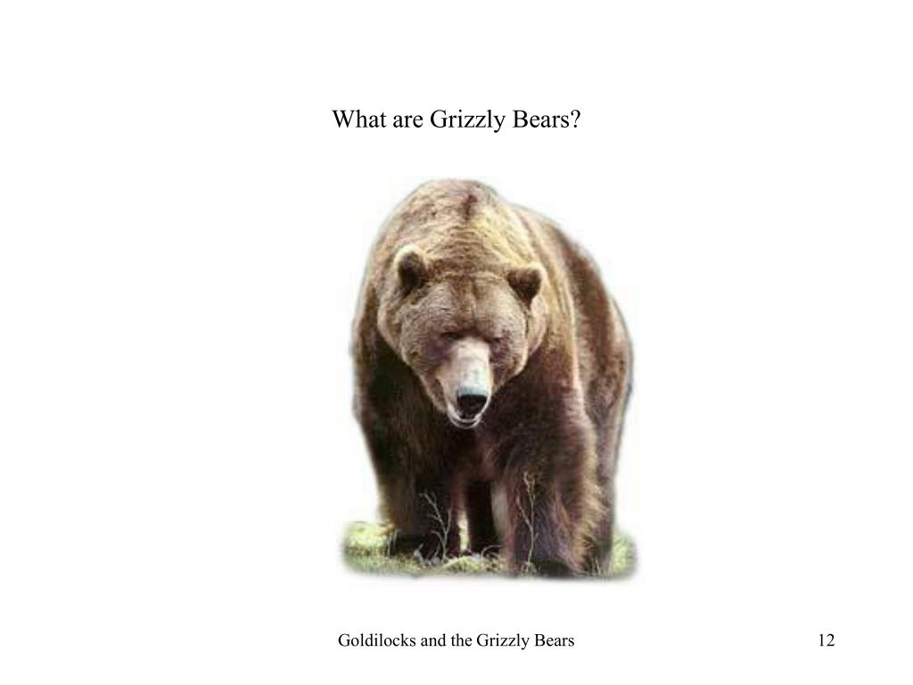 What are Grizzly Bears?