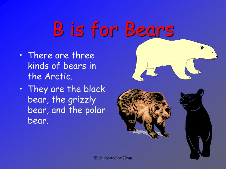B is for bears