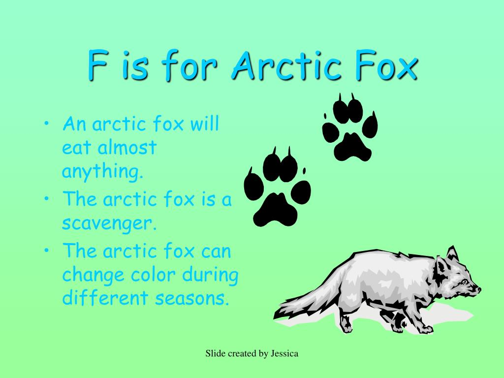 F is for Arctic Fox