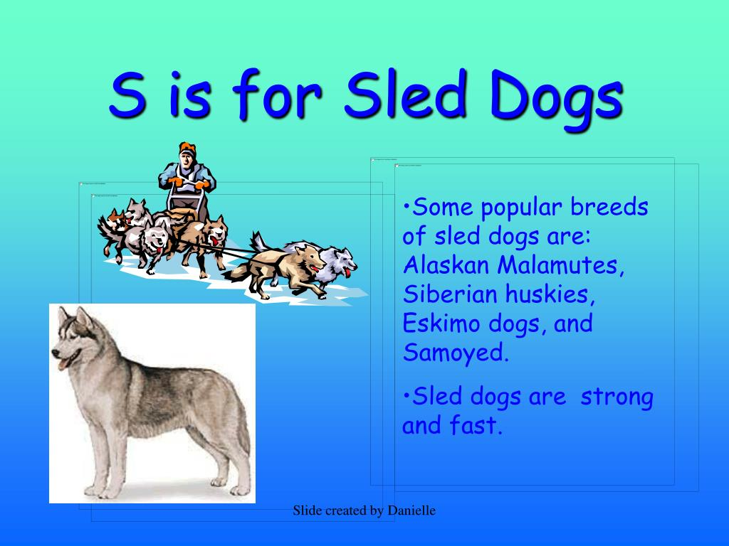 S is for Sled Dogs