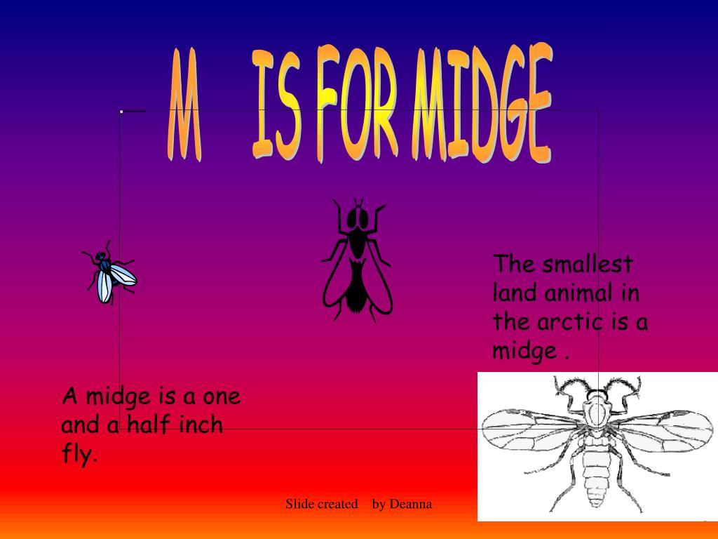 M    IS FOR MIDGE