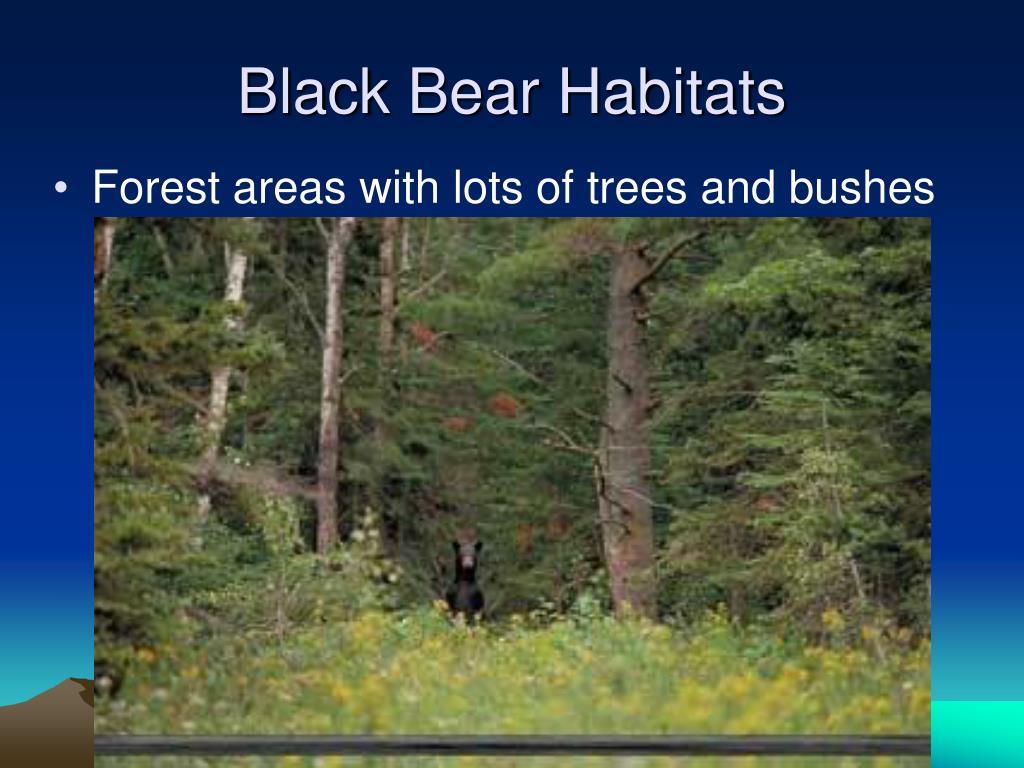 Black Bear Habitats