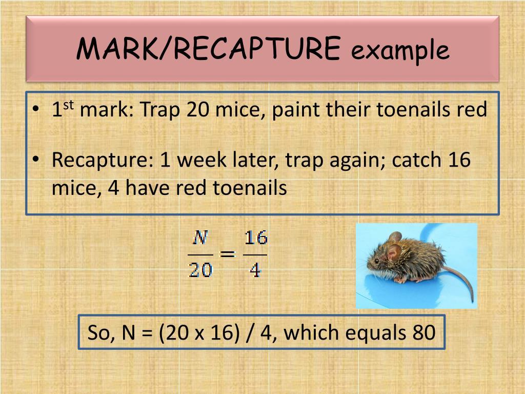 MARK/RECAPTURE