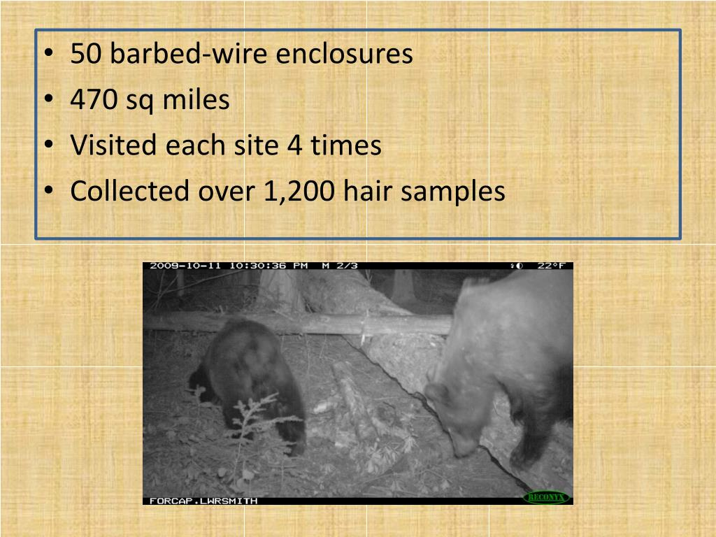 50 barbed-wire enclosures