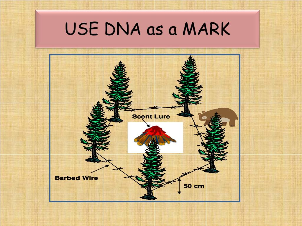 USE DNA as a MARK