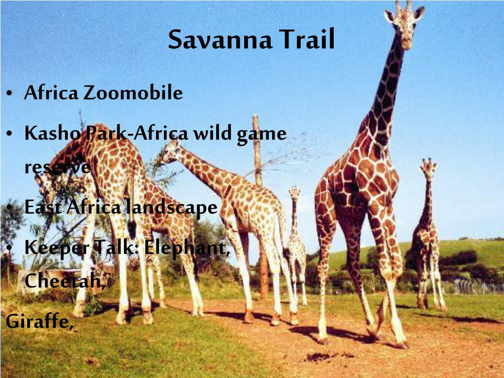 Savanna Trail