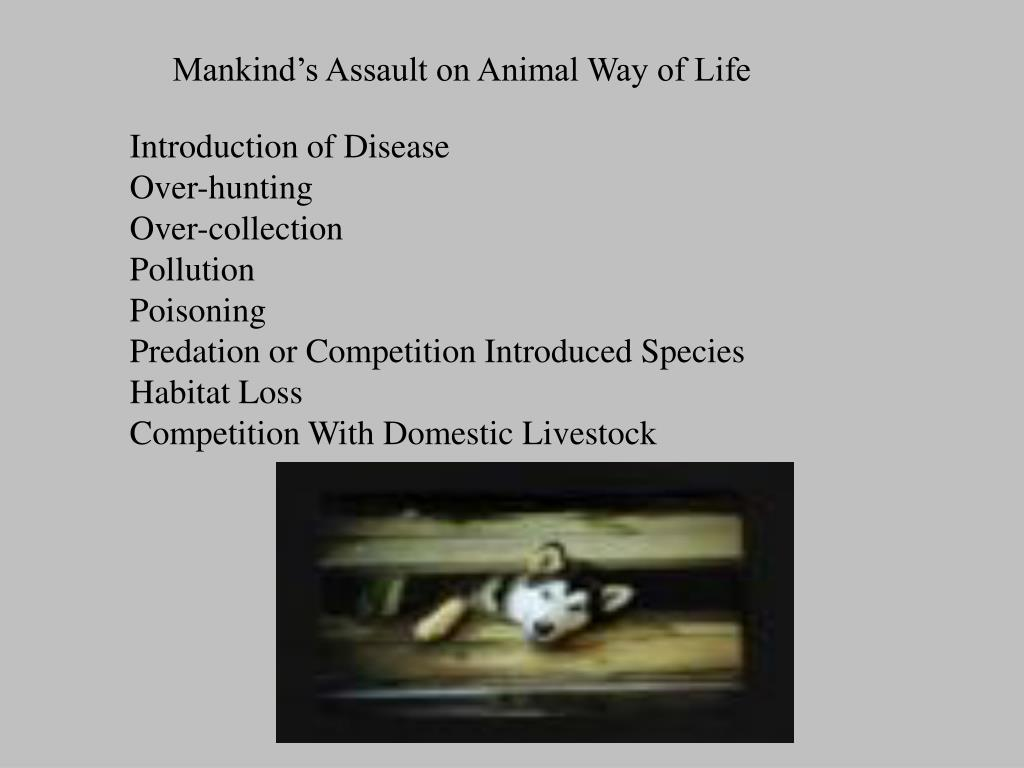 Mankind's Assault on Animal Way of Life