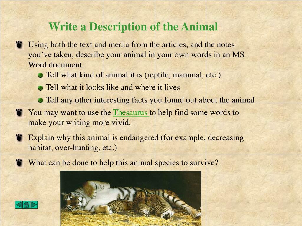 Write a Description of the Animal