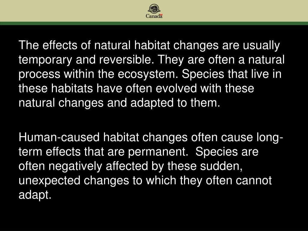 The effects of natural habitat changes are usually temporary and reversible. They are often a natural process within the ecosystem. Species that live in these habitats have often evolved with these natural changes and adapted to them.