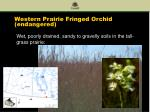 western prairie fringed orchid endangered