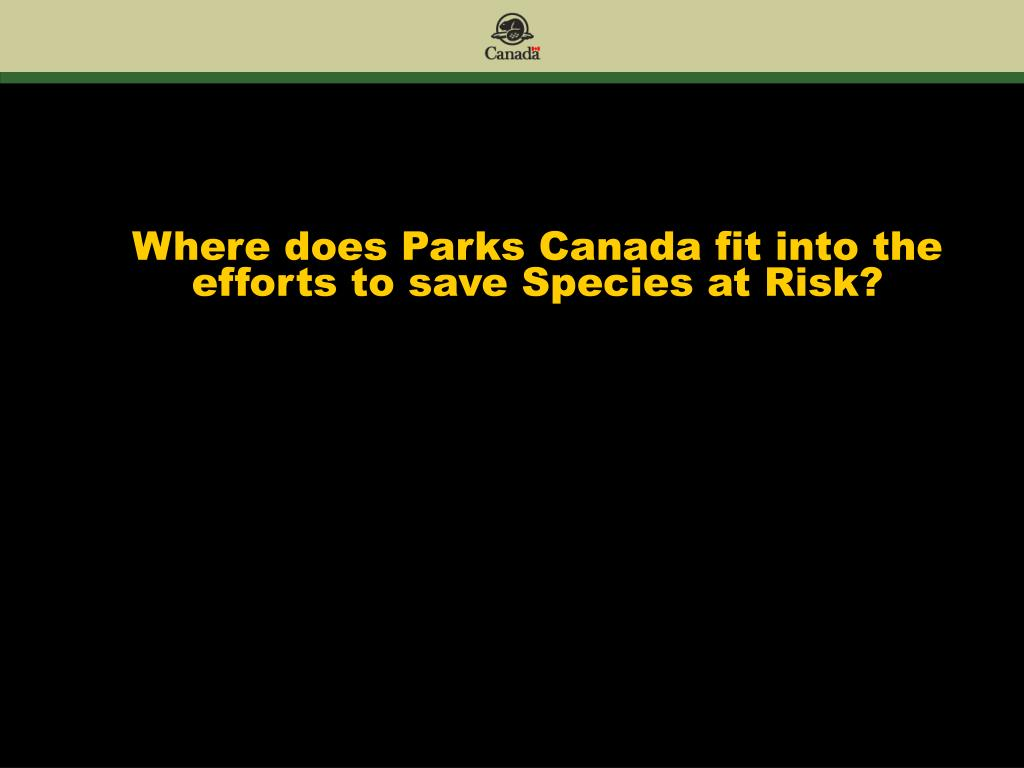 Where does Parks Canada fit into the efforts to save Species at Risk?