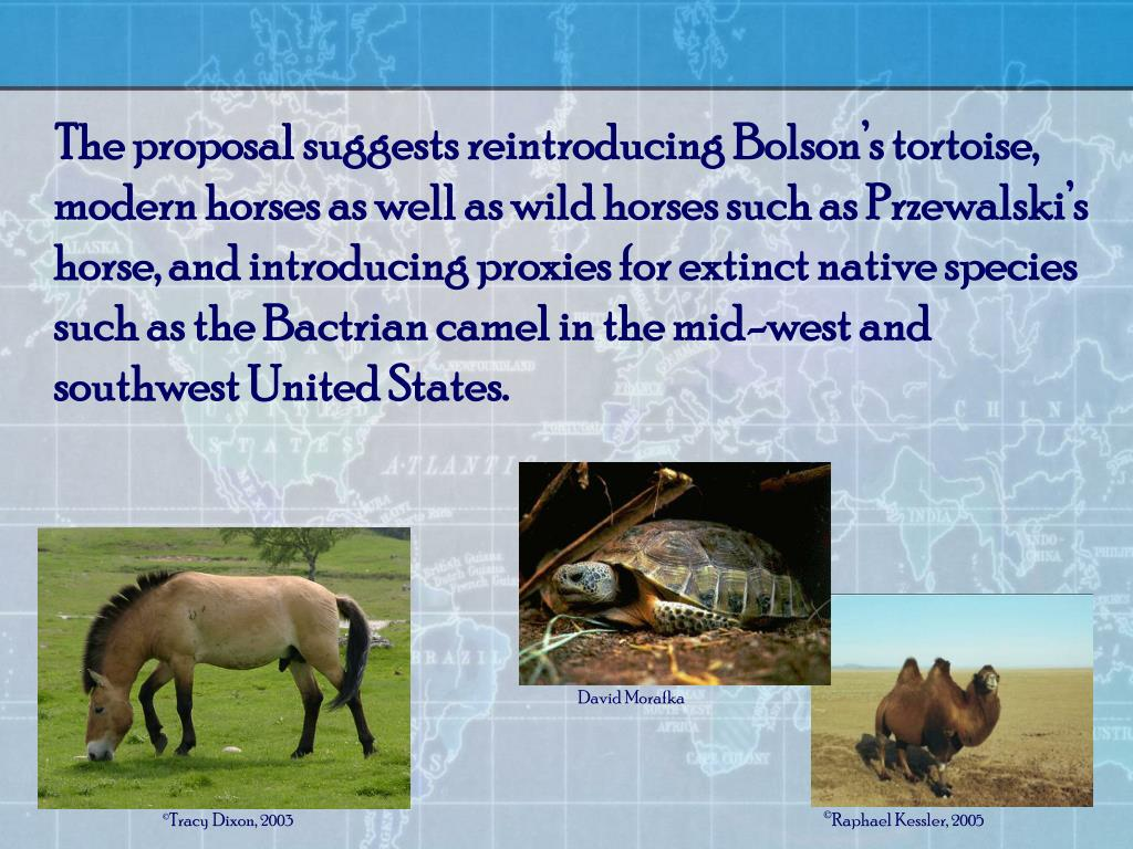 The proposal suggests reintroducing Bolson's tortoise, modern horses as well as wild horses such as Przewalski's horse, and introducing proxies for extinct native species such as the Bactrian camel in the mid-west and southwest United States.