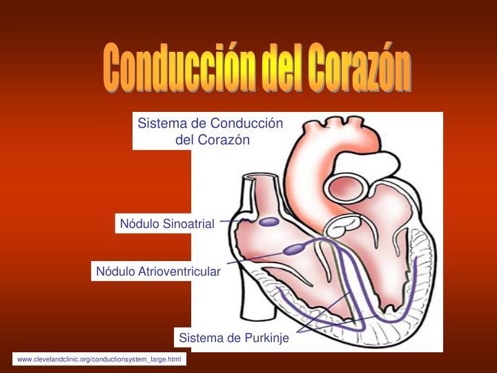 Conducción del Corazón