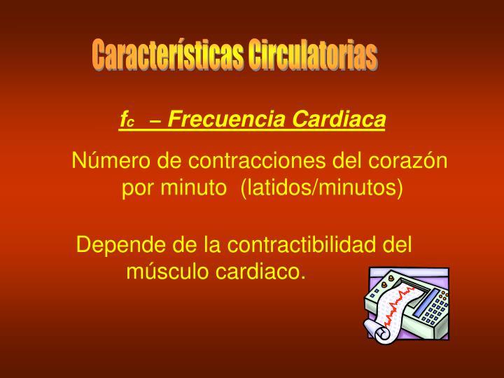 Características Circulatorias