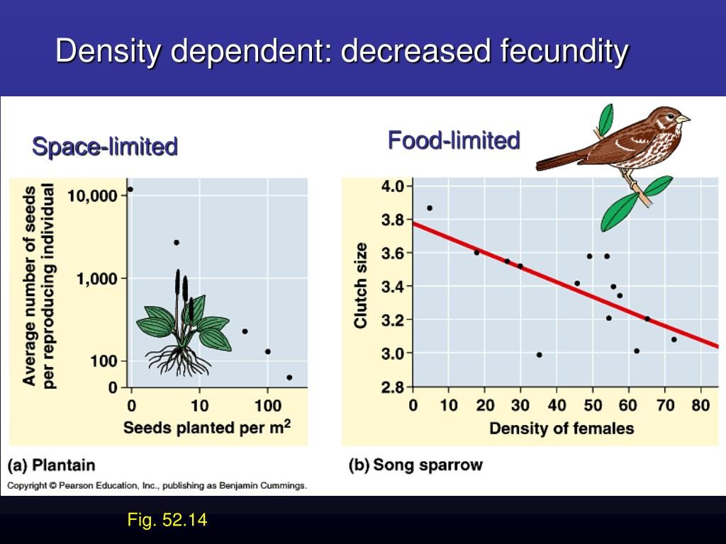 Density dependent: decreased fecundity