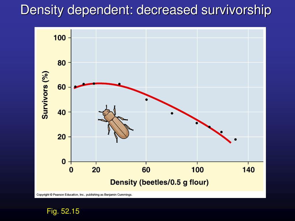 Density dependent: decreased survivorship