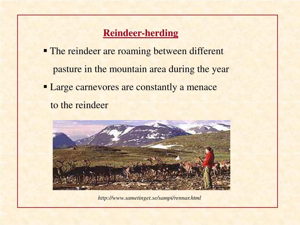 Reindeer-herding
