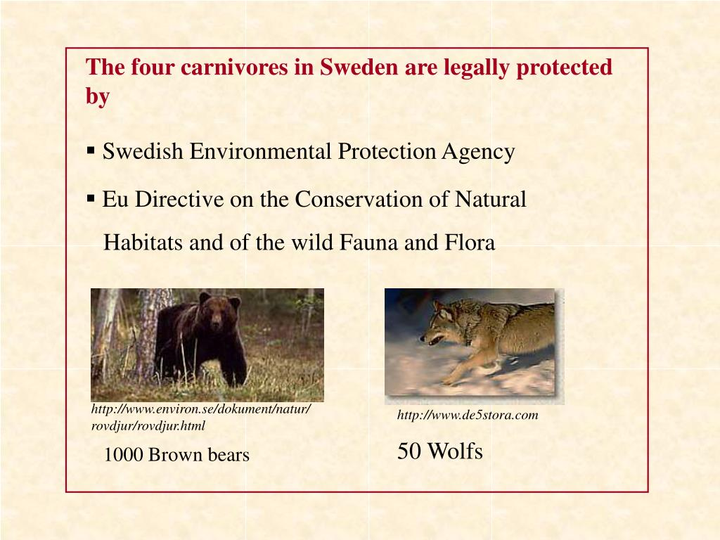 The four carnivores in Sweden are legally protected by