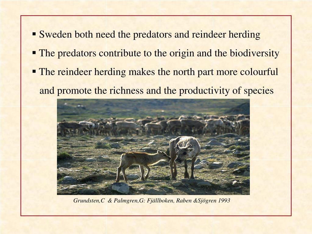 Sweden both need the predators and reindeer herding