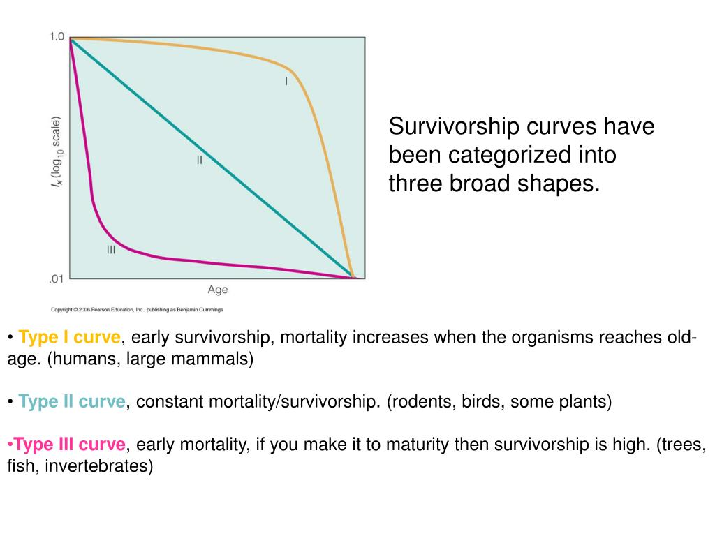 Survivorship curves have been categorized into three broad shapes.
