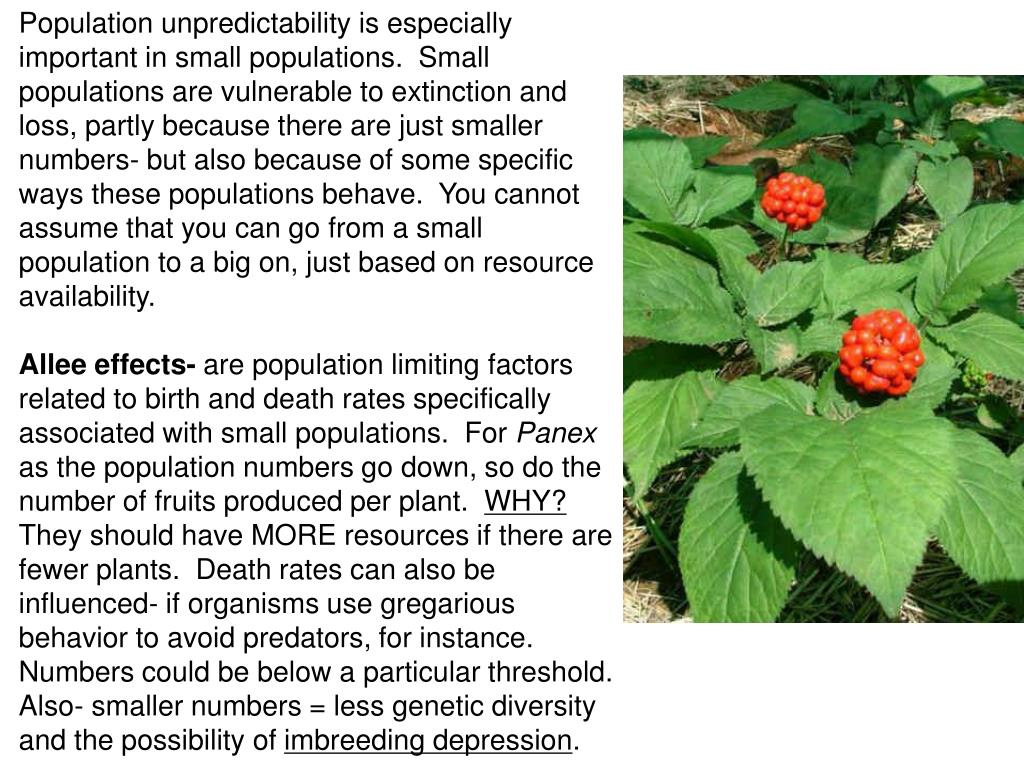Population unpredictability is especially important in small populations.  Small populations are vulnerable to extinction and loss, partly because there are just smaller numbers- but also because of some specific ways these populations behave.  You cannot assume that you can go from a small population to a big on, just based on resource availability.