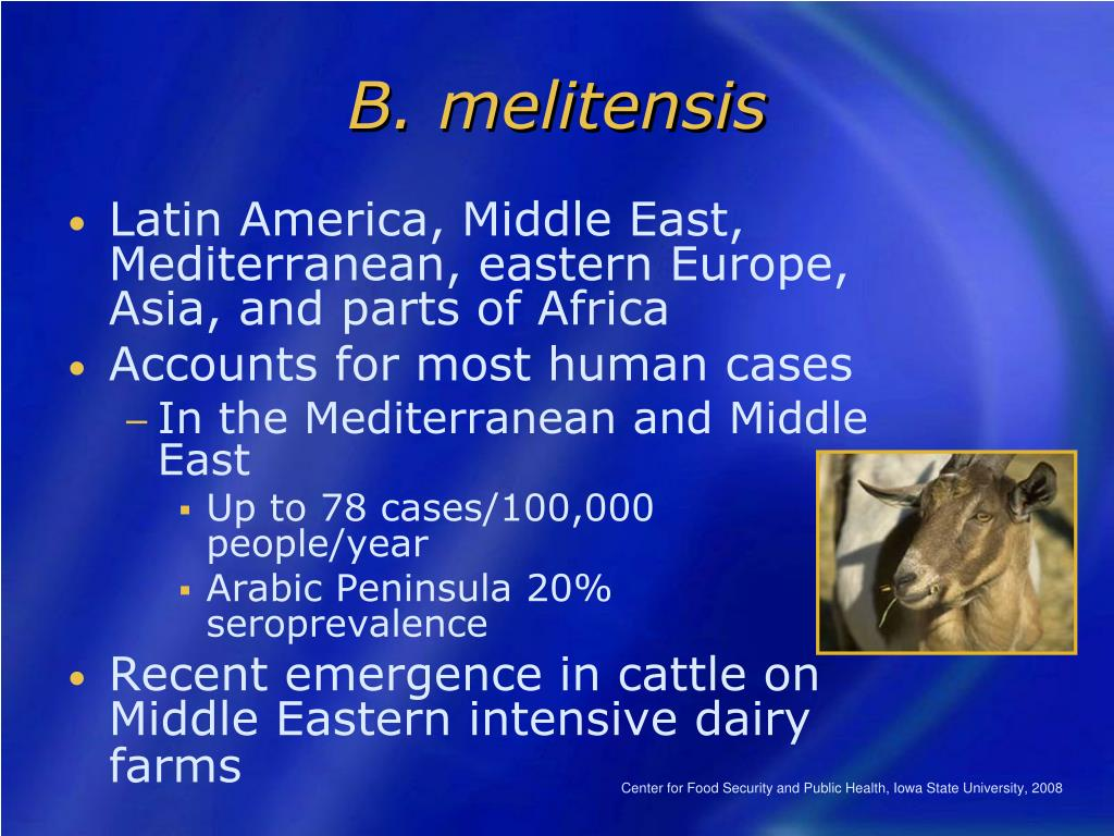 B. melitensis