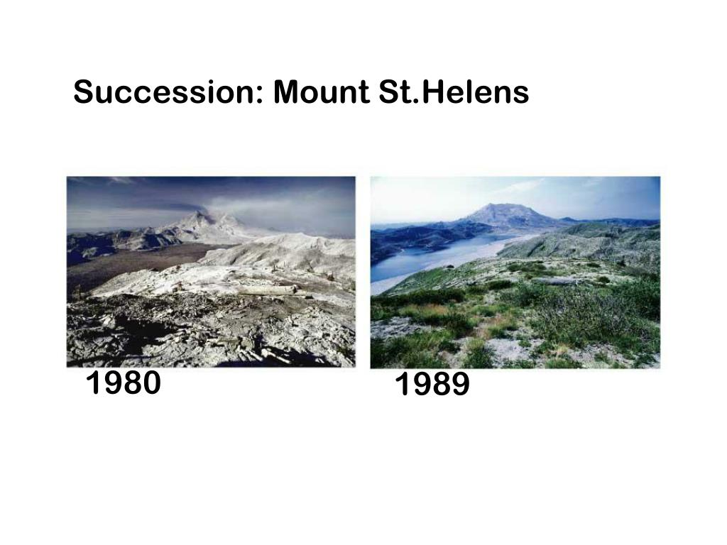 Succession: Mount St.Helens