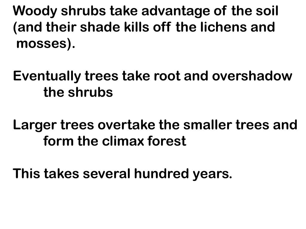 Woody shrubs take advantage of the soil