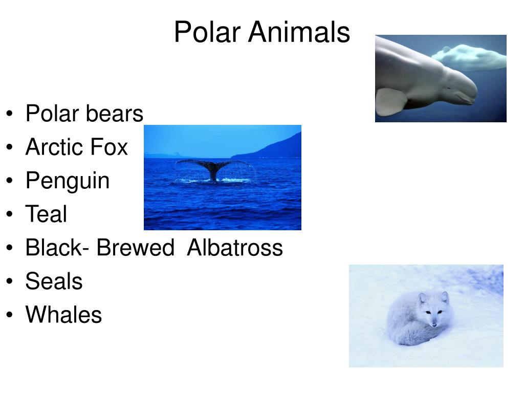 Polar Animals