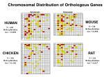 chromosomal distribution of orthologous genes