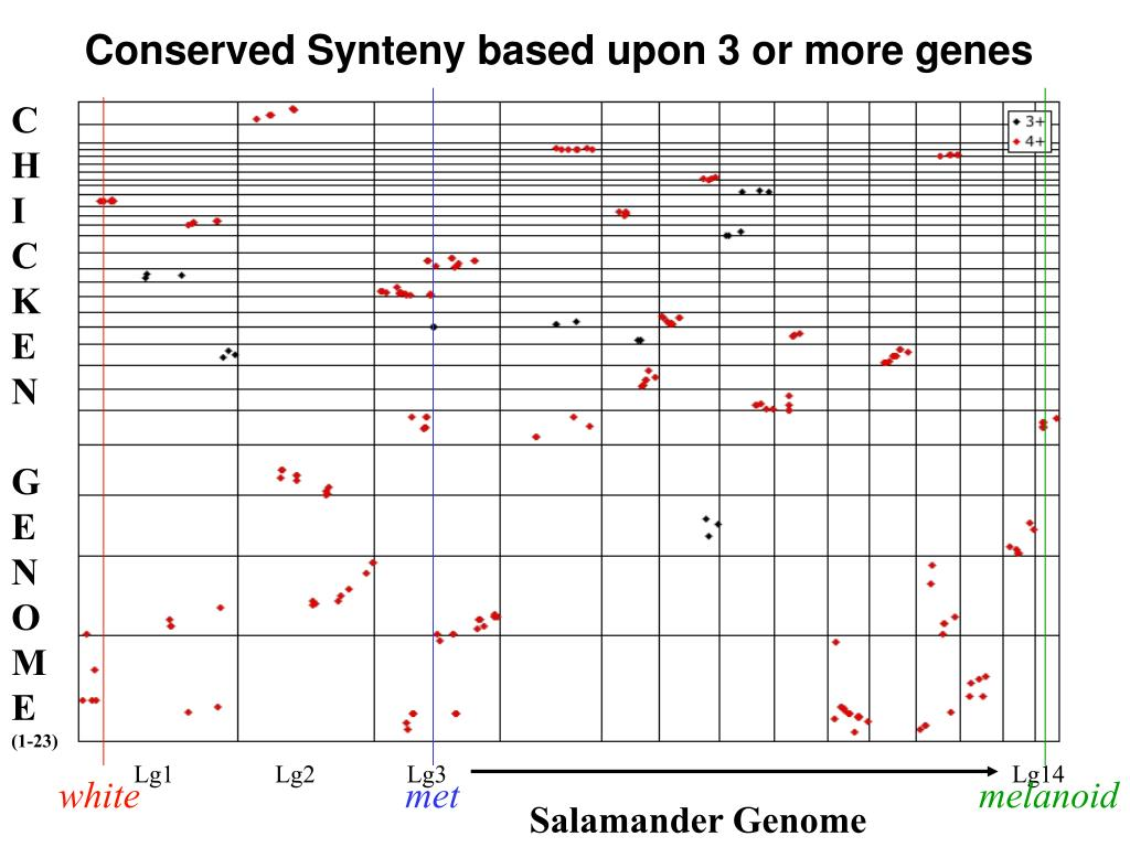 Conserved Synteny based upon 3 or more genes