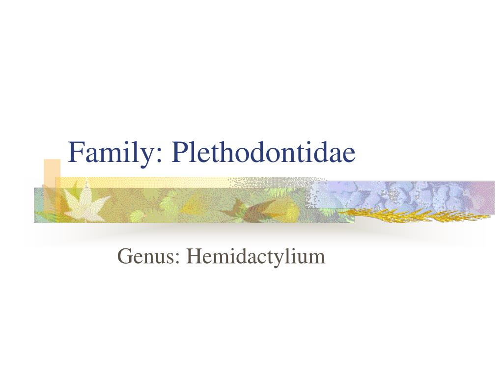 Family: Plethodontidae