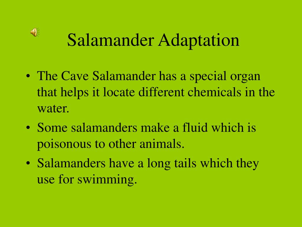 Salamander Adaptation