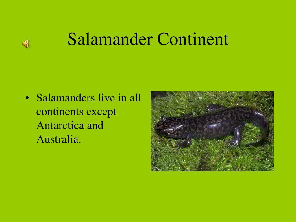Salamander Continent