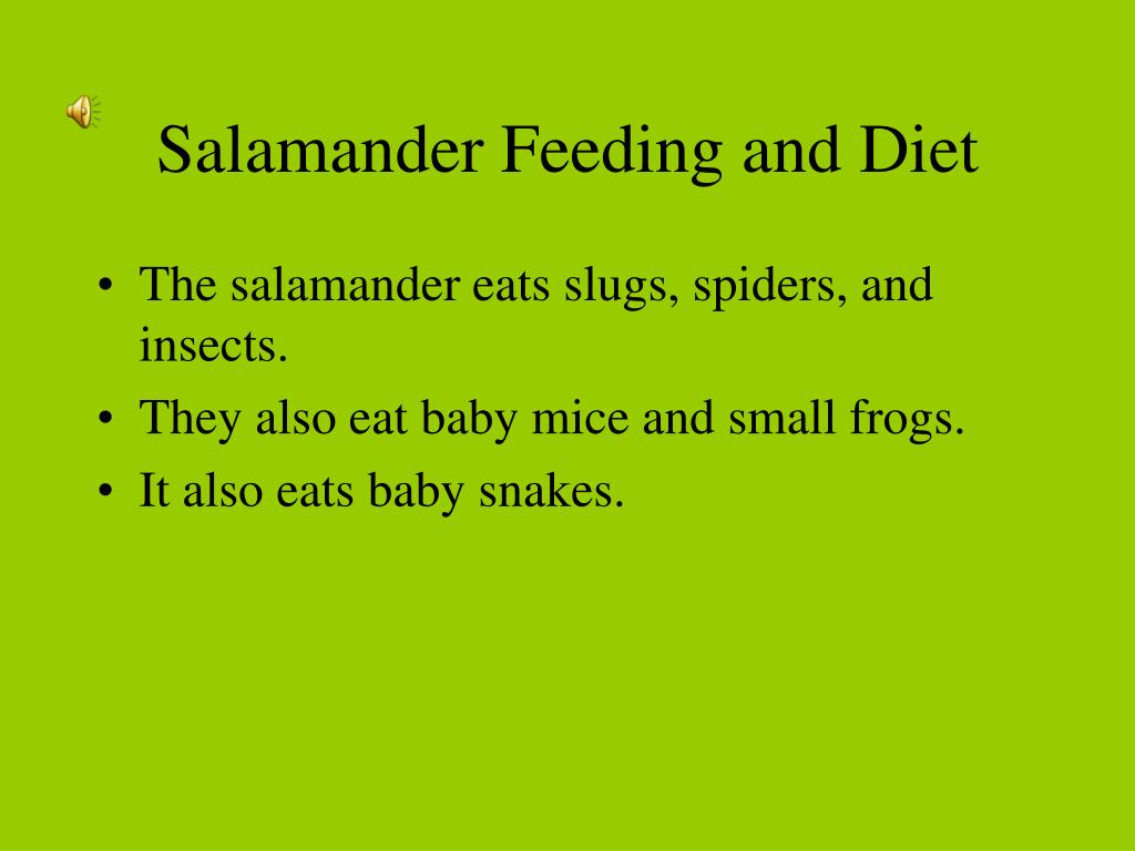 Salamander Feeding and Diet