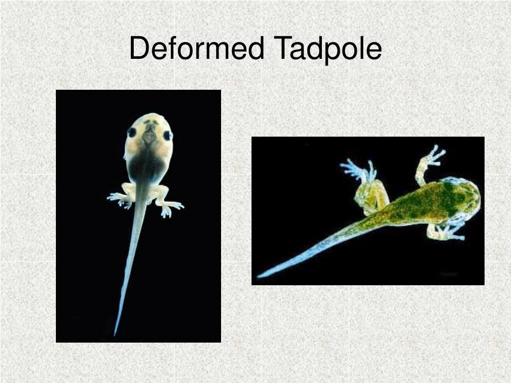 Deformed Tadpole