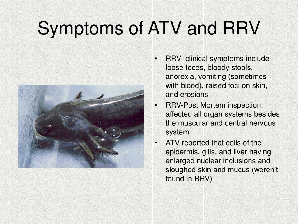 Symptoms of ATV and RRV
