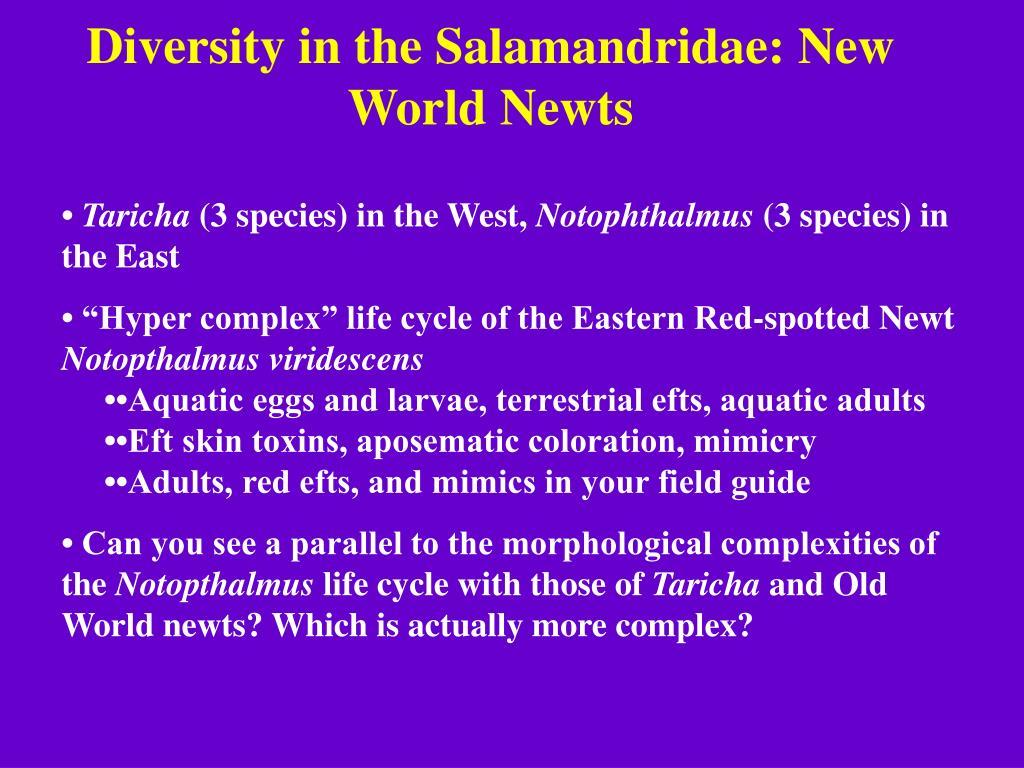 Diversity in the Salamandridae: New World Newts