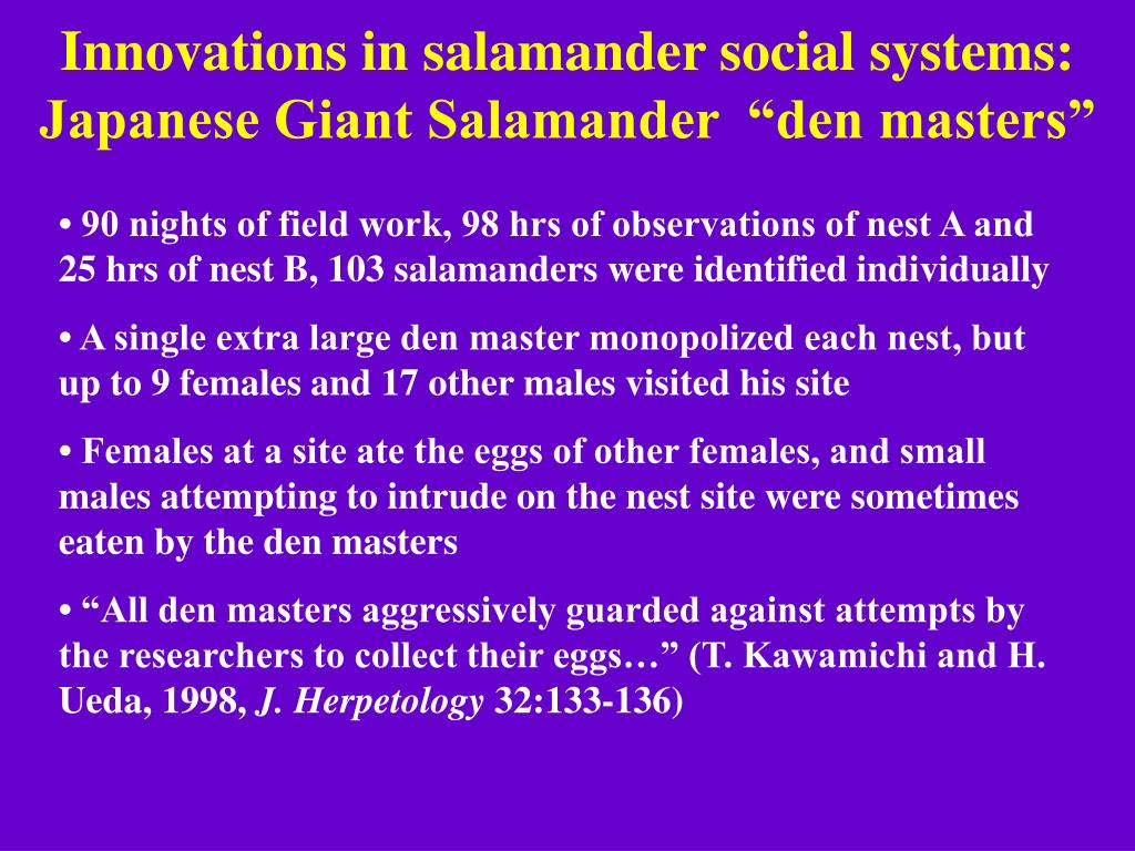 "Innovations in salamander social systems: Japanese Giant Salamander  ""den masters"""