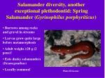 salamander diversity another exceptional plethodontid spring salamander gyrinophilus porphyriticus