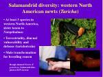 salamandrid diversity western north american newts taricha