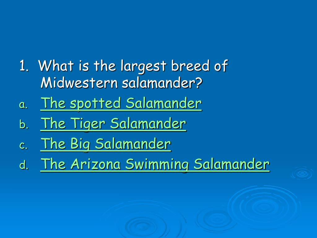 1.  What is the largest breed of Midwestern salamander?