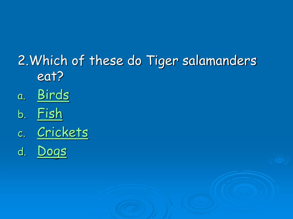 2.Which of these do Tiger salamanders eat?