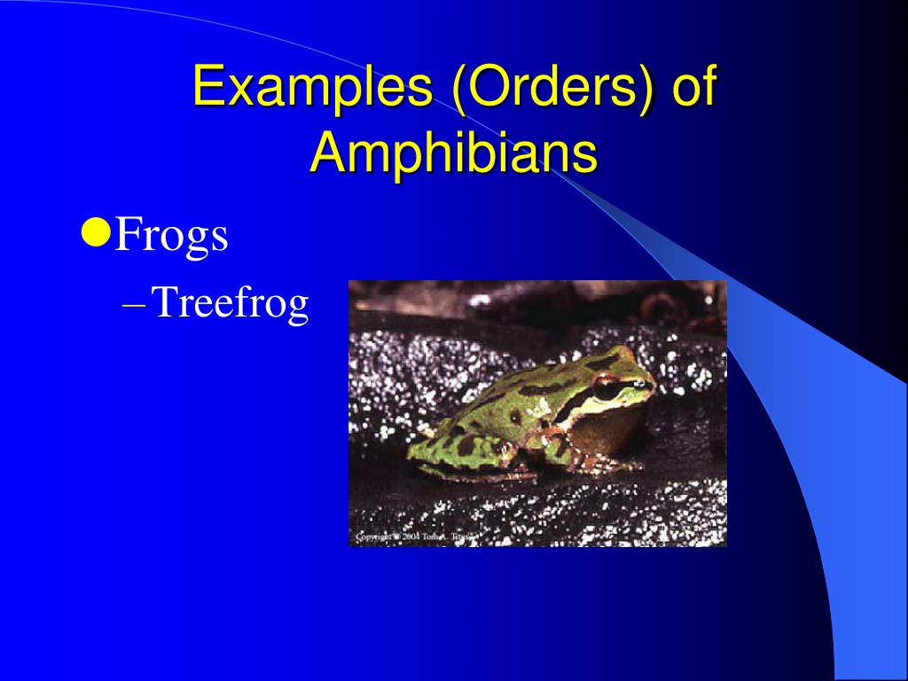 Examples (Orders) of Amphibians