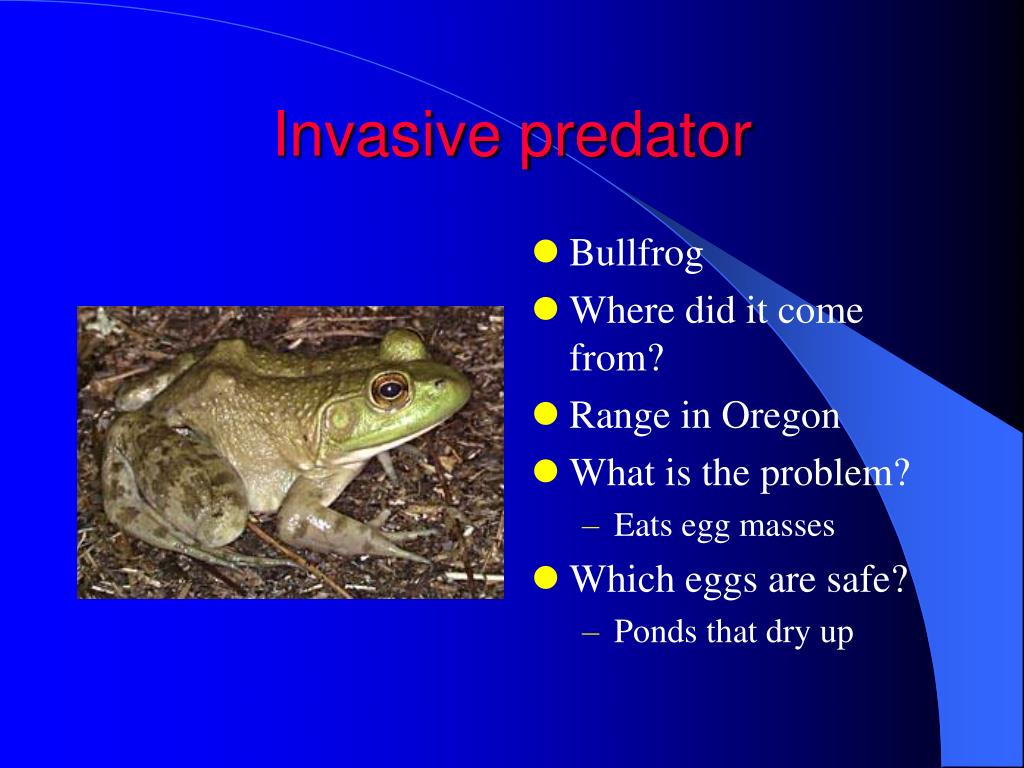 Invasive predator