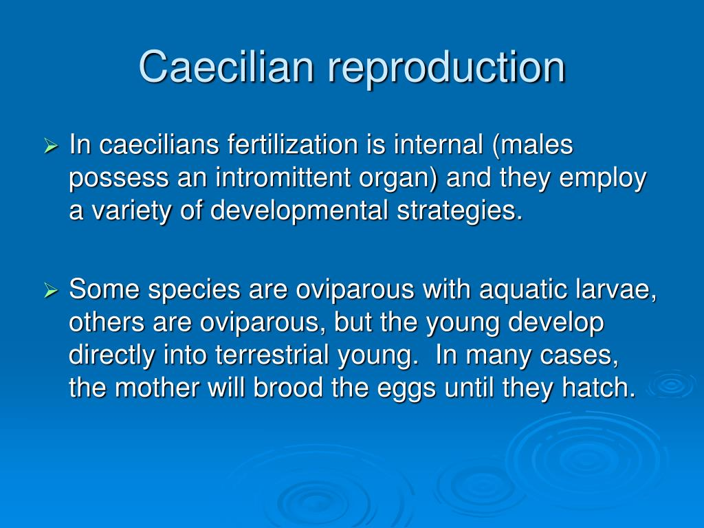 Caecilian reproduction