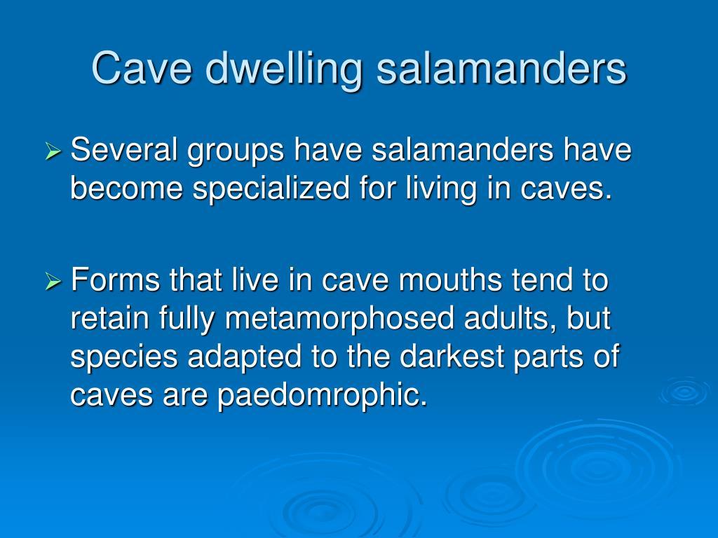 Cave dwelling salamanders